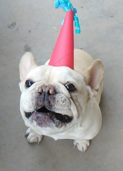 Happy Birthday to you Wally! Yes, I made him a hat and this is him on his actual birthday earlier this month. Hear how he asks for a hotdog treat  here .